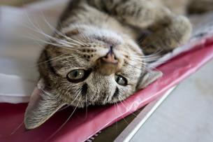猫の写真素材 [FYI00101421]