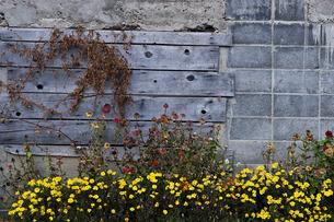 壁の写真素材 [FYI00101423]