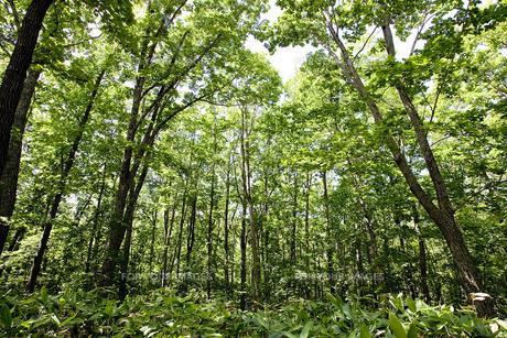森林の素材 [FYI00101434]