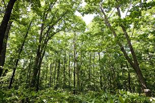 森林の写真素材 [FYI00101434]
