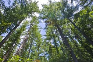 森林の写真素材 [FYI00101440]