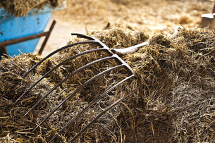 干し草の写真素材 [FYI00101445]