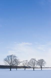 冬の写真素材 [FYI00101462]