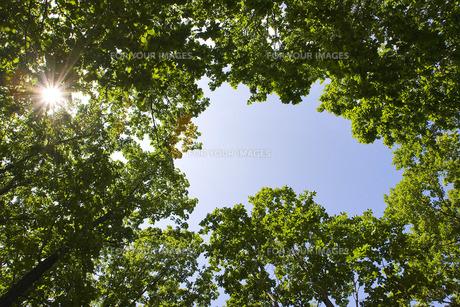 森林の素材 [FYI00101470]