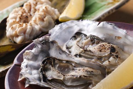牡蠣の素材 [FYI00101481]