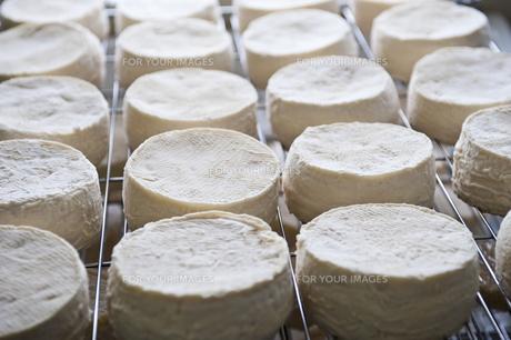チーズの写真素材 [FYI00101482]