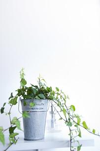 観葉植物の写真素材 [FYI00101487]