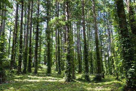 森林の素材 [FYI00101494]