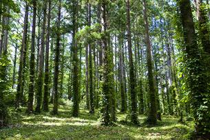 森林の写真素材 [FYI00101494]