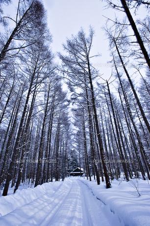 冬景色の素材 [FYI00101537]