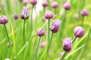 開花の写真素材 [FYI00101601]