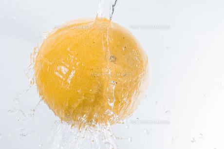 グレープフルーツの写真素材 [FYI00101780]