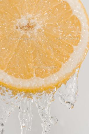 果物の写真素材 [FYI00101789]