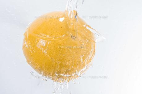 グレープフルーツの写真素材 [FYI00101802]