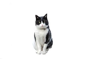 雑種の猫の写真素材 [FYI00101850]
