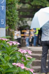 紫陽花と踏切の写真素材 [FYI00102024]