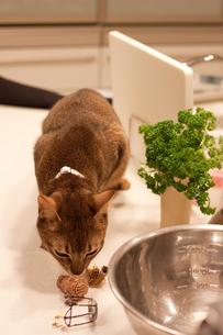 ワインコルクの匂いをかぐ猫の写真素材 [FYI00102207]