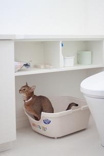 トイレに入る猫の素材 [FYI00102213]