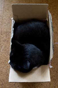 段ボール箱の中の猫の写真素材 [FYI00102798]