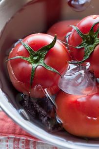ボウルで冷やしているトマトの写真素材 [FYI00102839]
