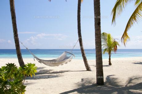南の島のビーチにあったハンモックの写真素材 [FYI00103026]