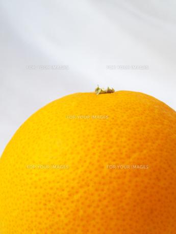 オレンジの素材 [FYI00103040]