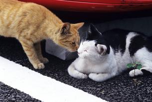 猫の会話の素材 [FYI00103172]