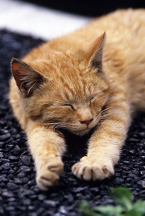 熟睡の写真素材 [FYI00103178]