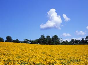 雲と花畑の写真素材 [FYI00103182]