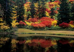 秋の大雪高原沼の写真素材 [FYI00103185]