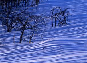 雪原と木陰の写真素材 [FYI00103186]