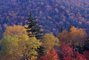 木々の紅葉の写真素材 [FYI00103190]