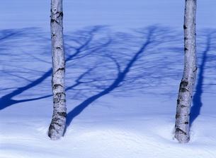 白樺と雪原の写真素材 [FYI00103195]