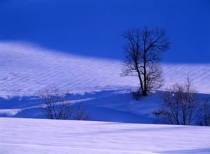 冬の木立の写真素材 [FYI00103210]