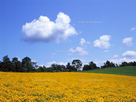 雲と花の大地の素材 [FYI00103211]