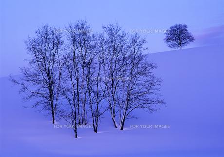 夕暮れの冬の丘の素材 [FYI00103219]