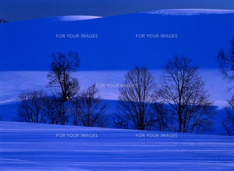 冬の丘と木立の素材 [FYI00103220]