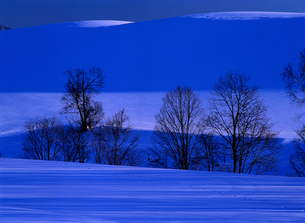 冬の丘と木立の写真素材 [FYI00103220]