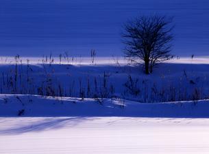 冬の木蔭の写真素材 [FYI00103222]