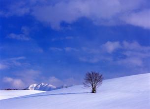 北海道の冬の丘の写真素材 [FYI00103225]