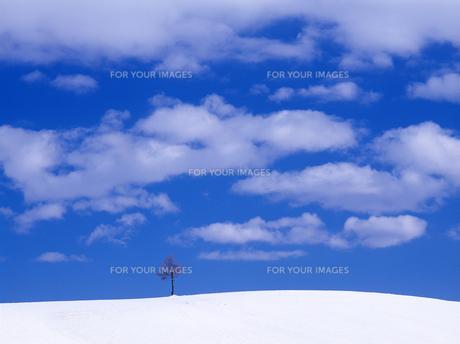 青空と冬の丘の素材 [FYI00103226]