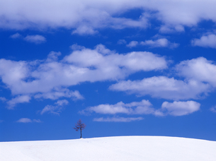 青空と冬の丘の写真素材 [FYI00103226]