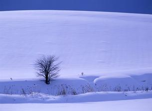 冬の丘の素材 [FYI00103229]