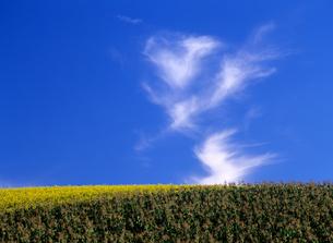 秋の丘と雲の素材 [FYI00103241]