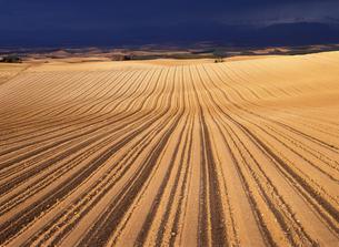 夕映えの耕地の写真素材 [FYI00103256]