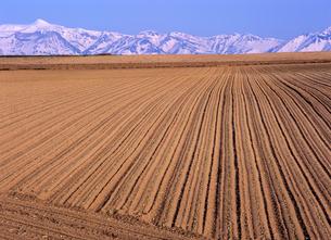 春の耕地と十勝連峰の写真素材 [FYI00103258]