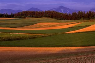 暮れゆく春の丘の写真素材 [FYI00103261]