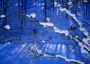 森の枝の積雪の素材 [FYI00103262]