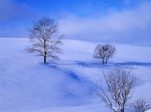 雪原と冬の木立の素材 [FYI00103266]