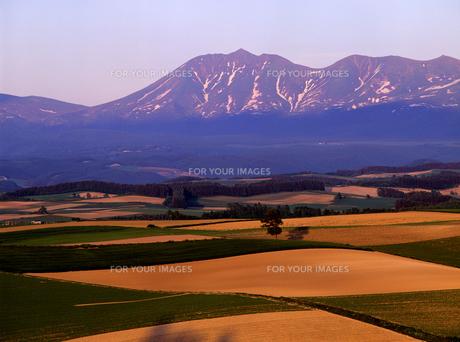 夕暮れの丘と山の素材 [FYI00103275]